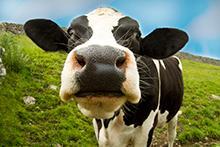 milk-roots-fruits-harrogate-greengrover-farmshop.jpg